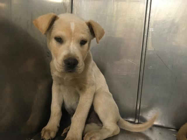 City of Mobile Animal Shelter: Adopt a Pet
