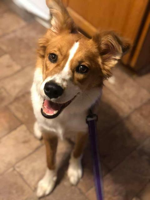 Available Dogs in Maine - THE PIXEL FUND